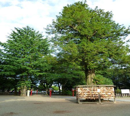 saitama washimiya jinjya 02 20110625_R