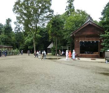 washinomiya jinjya hajisai cosu play01 20110904_R