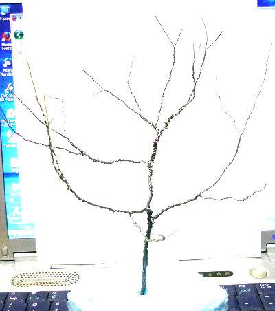 000006_20100113040258.jpg