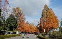 鏡山公園でアコの練習20131124-1