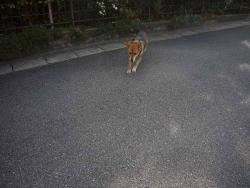 散歩20131124-2
