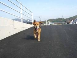 散歩20131124-3