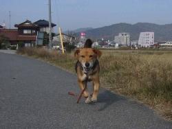 散歩20131124-4