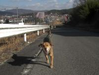 散歩20100126-2