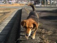 散歩20100126-3