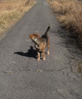 散歩20100127-3