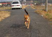 散歩20100128-4