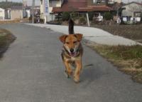 散歩20100129-3