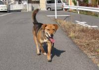 散歩20100214-1