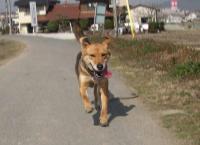 散歩20100214-4