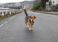 散歩20100226-3