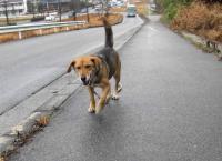 散歩20100226-4