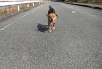 散歩20100228-2