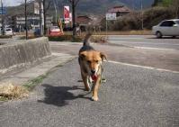 散歩20100228-4