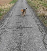 散歩20100325-4