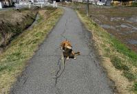 散歩20100326-4