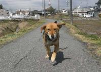 散歩20100326-5
