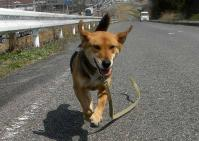 散歩20100327-2