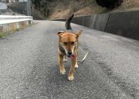 散歩20100328-1