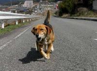 散歩20100329-2