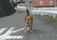 散歩20100328-2