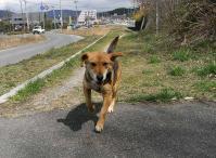 散歩20100329-4