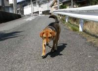 散歩20100330-1