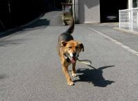 散歩20100330-2