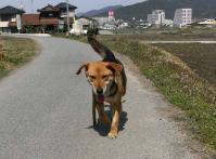 散歩20100330-3