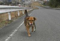 散歩20100331-2
