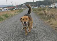 散歩20100331-4