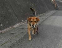 散歩20100426-2