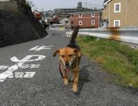 散歩20100426-3