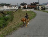 散歩20100426-5