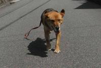 散歩20100428-122