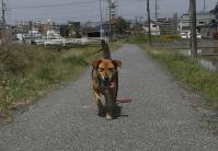 散歩20100428-4