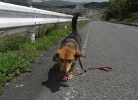 散歩20100429-2