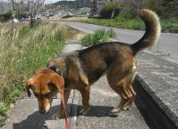 散歩20100429-3