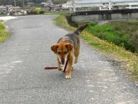 散歩20100430-5
