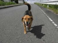散歩20100527-2