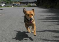散歩20100528-1