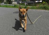 散歩20100528-2