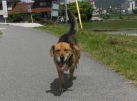散歩20100528-3