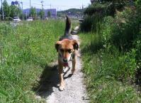 散歩20100529-2