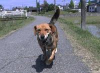 散歩20100529-3