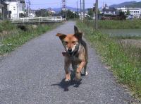 散歩20100529-4