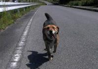 散歩20100530-2