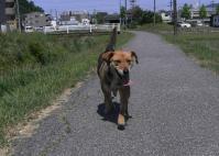 散歩20100530-3