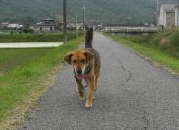 散歩20100531-2