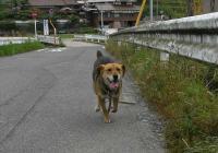 散歩20100531-3